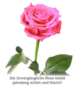 Unverg�ngliche Rose Pink - 2